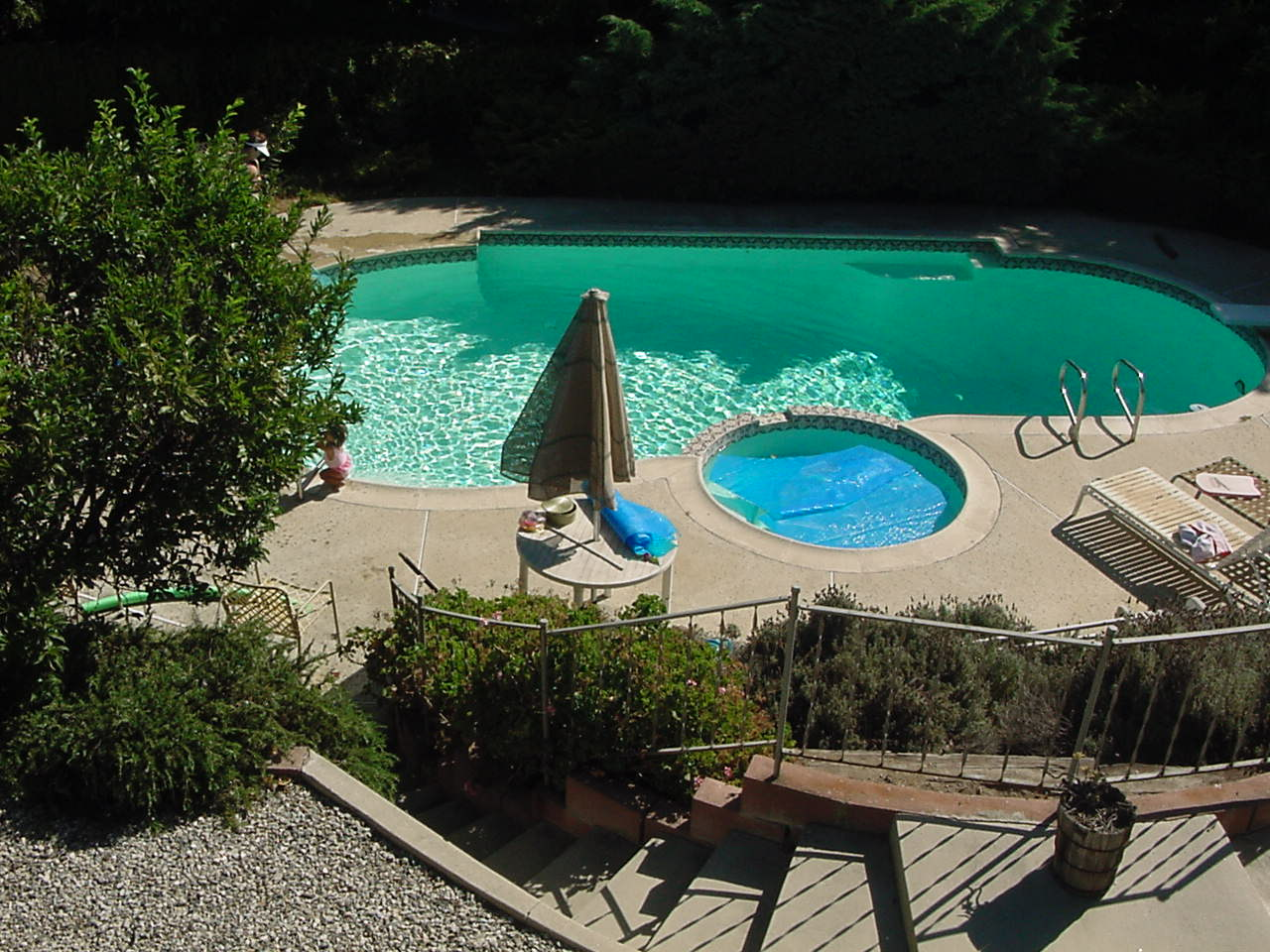 Walter and Susie's backyard and pool
